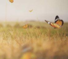 Insektensterben aufhalten: Damit wir nicht bis zum Hals in der Scheiße stehen